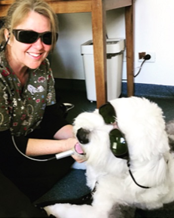 Henri has laser therapy