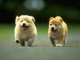 Two puppies running.