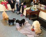 Puppies playing with each other at our puppy school in Bentleigh